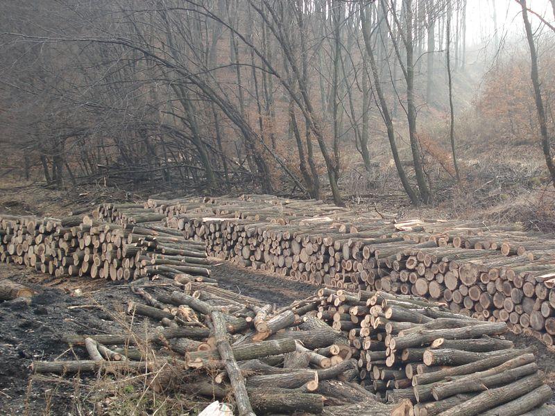 Vásárolni Tűzifa