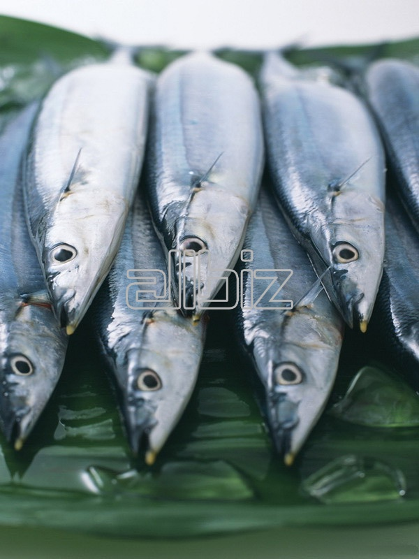 Vásárolni Hek hal