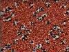 Vásárolni Balta szőnyegek