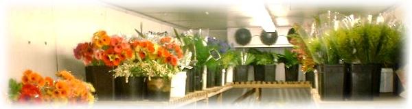 Vásárolni Virághűtők