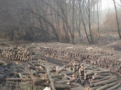 Tűzifa