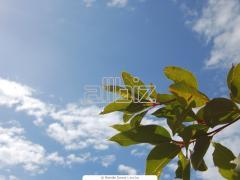 Naturland Eukaliptusz illóolaj 10 ml
