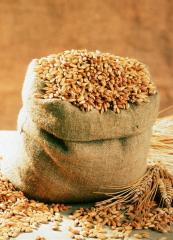 Пшеничный солод.