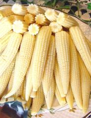 Csemegés bébi kukorica