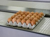L méret (63-73 gr) tojás