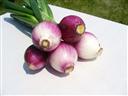 Főzöhagyma lila 5 db