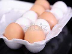 M méretű tojás tálcán