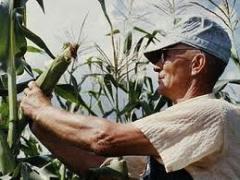 Ember  foglalkoztatás mezőgazdaságban